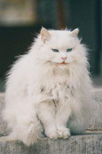 Intimidating cat